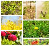 Spring season collage — Stock Photo