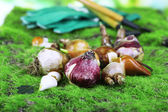 Flower bulbs on grass background — Foto Stock