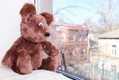Toy-bear looking out window close-up — Stock Photo