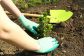Gardener planting tree in spring — Foto Stock
