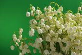 Beautiful lilies of the valley on green background — Zdjęcie stockowe