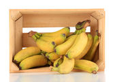 Bunch of mini bananas in wooden box isolated on white — Stock Photo