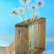 Dandelions in vases on blue background — Stock Photo #47397735