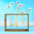 Dandelions in vases on blue background — Stock Photo #47397741