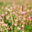 Beautiful wild flowers in the field — Stock Photo #47399267