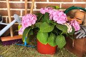 Ferramentas de jardineiro em fundo de tijolos — Fotografia Stock