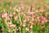 Beautiful wild flowers in the field — Stock Photo