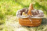 Little cute ducklings in basket on green grass, outdoors — Stock Photo
