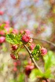 Fiore di frutta bella, all'aperto — Foto Stock