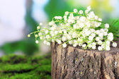 Beautiful lilies of the valley on stump, on nature background — Zdjęcie stockowe