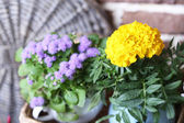 Beautiful flowers in pots, close-up — Stock Photo