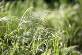 Beautiful green grass, outdoors — Stock Photo