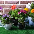 Flowers in decorative pots on green grass, on bricks background — Stock Photo
