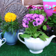 Flowers in decorative pots and garden tools on green grass, on bricks background — Stock Photo