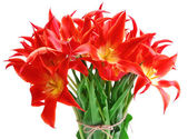 Beautiful red tulips, isolated on white — Stock Photo