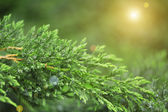 Green plant, outdoors — Stock Photo