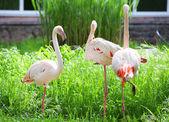 Flamingo im park — Stockfoto