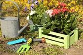 Gardening concept: beautiful flowers in garden with sun light — Stock Photo