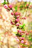 Owoc piękny kwiat, na zewnątrz — Zdjęcie stockowe