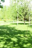 Tree shadow on green grass — Stock Photo