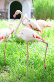 Flamingo in park — Stock Photo