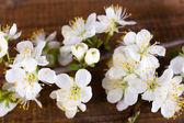 Blooming tree branch with white flowers on wooden background — Stock Photo