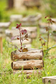 Old wooden crates, outdoors — Stock Photo
