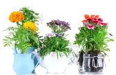 Blommor i dekorativa krukor isolerad på vit — Stockfoto