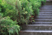 Stone steps in garden — Stock Photo