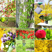 Spring season collage — Stock Photo