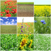 Collage of beautiful fields — Stock Photo