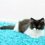 Little cute kitten on carpet — Stock Photo #47837861