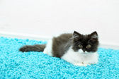 Little cute kitten on carpet — Stock Photo
