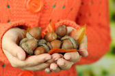 Man hands with acorns, on bright background — Stock Photo