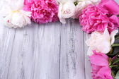 Beautiful pink and white peonies on color wooden background — Stock Photo