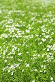 Прекрасный льна в поле — Стоковое фото