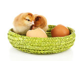 Little cute chickens and egg shell isolated on white — Stock Photo