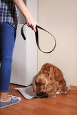Cruel treatment with dog — Stock Photo