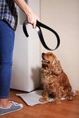 Cruel treatment with dog — Stock Photo