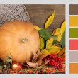 Autumn still life with pumpkin. Color palette with complimentary swatches — Stock Photo #47905187