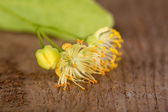 Branch of linden flowers on wooden background — Stock Photo