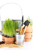 Green grass in flowerpots and gardening tools, isolated on white — Stock Photo