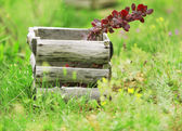 Old wooden box on green grass — Stock Photo