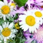 Beautiful wildflowers close up — Stock Photo #47921353