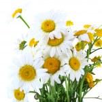 Beautiful chamomiles isolated on white — Stock Photo #47921401