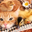 Red cat with cute ducklings and chickens in basket close up — Stock Photo #47922661