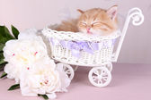 Cute little red kitten  sleeping in decorative basket, on bright background — Stock Photo