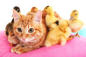 Red cat with cute ducklings on pink pillow close up — Stock Photo