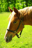 Purebred horse outdoors — Stock Photo