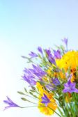 Beautiful wild flowers, on light blue background — Stock Photo